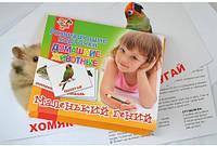 Набор развивающих карточек 1 Вересня Домашние животные (951286)