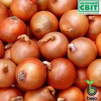 Семена лука Манас F1 (Бейо / Bejo) 250000 семян - среднепоздний (110-115 дней), желтый, круглый, репчатый., фото 2