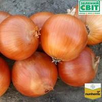 Семена лука Универсо F1 (Nunhems) 100000 семян - среднепоздний (115-120 дней), золотистый, круглый, репчатый.