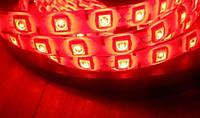 LED Светодиодная лента SMD 5050 12V 5м Красный цвет