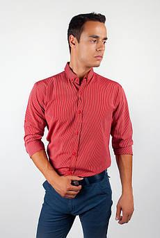 Рубашка осень 2016 в полоску №94F096 (Красный)