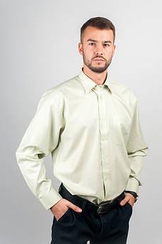 Рубашка нарядная мужская, светлая Fra №877-4 (Светло-оливковый)