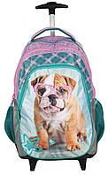 Рюкзак школьный на колесах Paso RACHAEL HALE RHR997