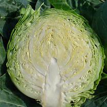 Семена капусты Оракл F1 (Clause) 1000 семян — раняя (55 дней), белокочанная, фото 2