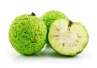 """Адамово яблоко"" семена  (маклюра, в упаковке 10 шт)"