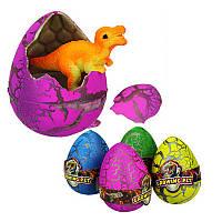Яйцо растишка