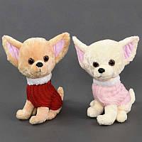 """Мягкая игрушка """"Собачка"""" 2 вида, высота 31см  27*30**31 см. /200/"""
