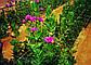 Шпалерная сетка огуречная Италия, фото 2