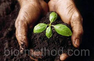 Как повысить плодородие почвы: виды удобрений и их применение