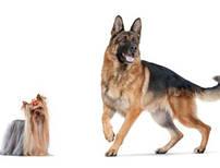 Royal Canin для окремих порід собак і цуценят