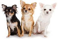 Royal Canin X-SMALL для собак (до 4 кг)