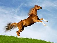 Хорсе Уни премикс для коней gepardd.com