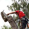 Спил дерева по частям