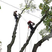 Спил дерева с завешиванием