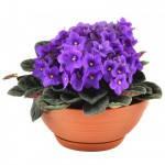 втоматический полив ваших комнатных цветов и растений