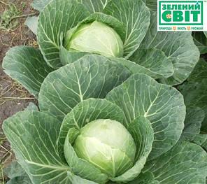 Семена капусты Сир F1 (Clause) 1000 семян — раняя (60 дней), белокочанная, фото 2