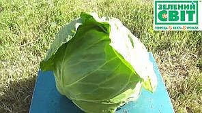 Семена капусты Акира F1 1000 сем — ранняя 48-52 дн, устойчивая к растрескиванию (УЦЕНКА), фото 2
