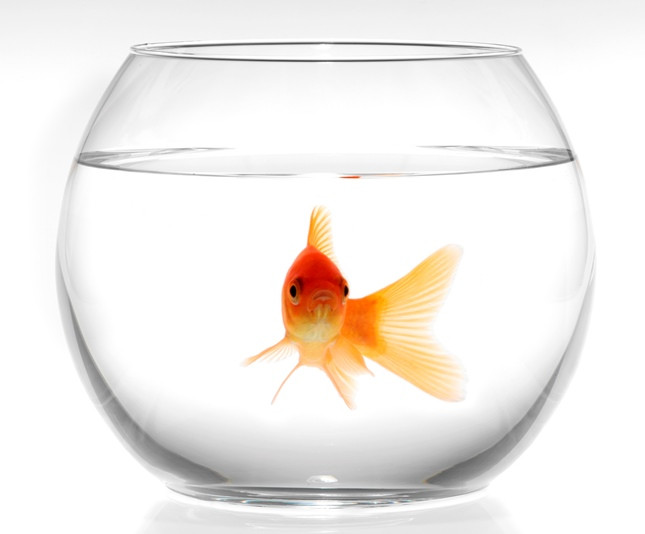 Ваза шар аквариум 6 л 200х250 мм