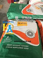 Семена подсолнечника Алан F1