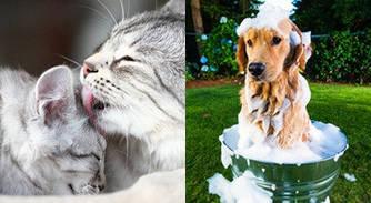 Догляд та гігієна для кішок і собак