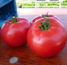 Семена томата Афен F1 (Clause) 250 семян — ранний (70 дней), РОЗОВЫЙ, круглый, индетерминантный., фото 2