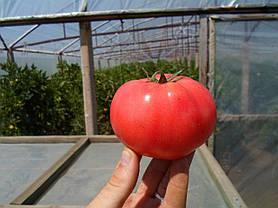 Семена томата Афен F1 (Clause) 250 семян — ранний (70 дней), РОЗОВЫЙ, круглый, индетерминантный., фото 3