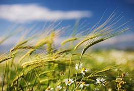 Советы по саду и огороду в августе