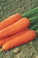 Морква Ступіцька  1кг. MoravoSeed