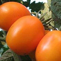 Семена томатов Де барао оранжевый