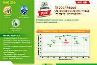 Гибрид кукурузы П8000/P8000 (ФАО 230)