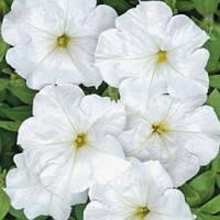 Семена Петуния Анжелика F1 белая 50 гранул, Cerny