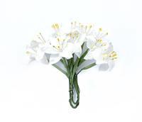 Лилия белая 5 шт.