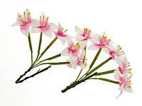 Лилия бело-розовая 5 шт.