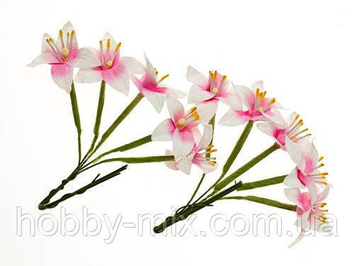 Лилия бело розовая