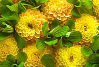 Фотообои Жёлтые цветы