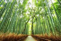 Фотообои Бамбуковый парк