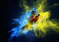 Фотообои Красочный полёт