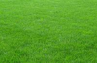Засухоустойчивый газон - минимум полива и ухода