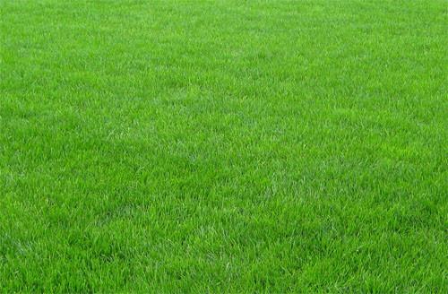 Засухоустойчивый газон - минимум полива и ухода, фото 1