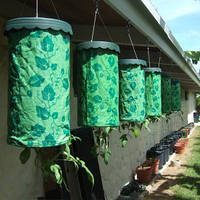 Выращивание в теплице и дома томатов, огурцов, растений - приспособление Плантация