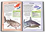 Акули і скати. 50 найвідоміших видів, фото 3