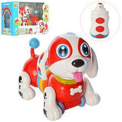 Собака BB396 (12шт) р/у,25см,ездит,муз-зв(англ),св,пианино,подв.голова,на бат,в кор-ке,34,5-25-18см