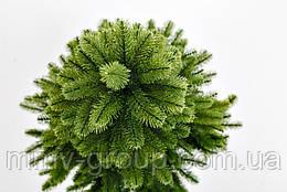 Ель Канадская Литая зеленая 180 см