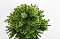 Ель Канадская Литая зеленая 230 см