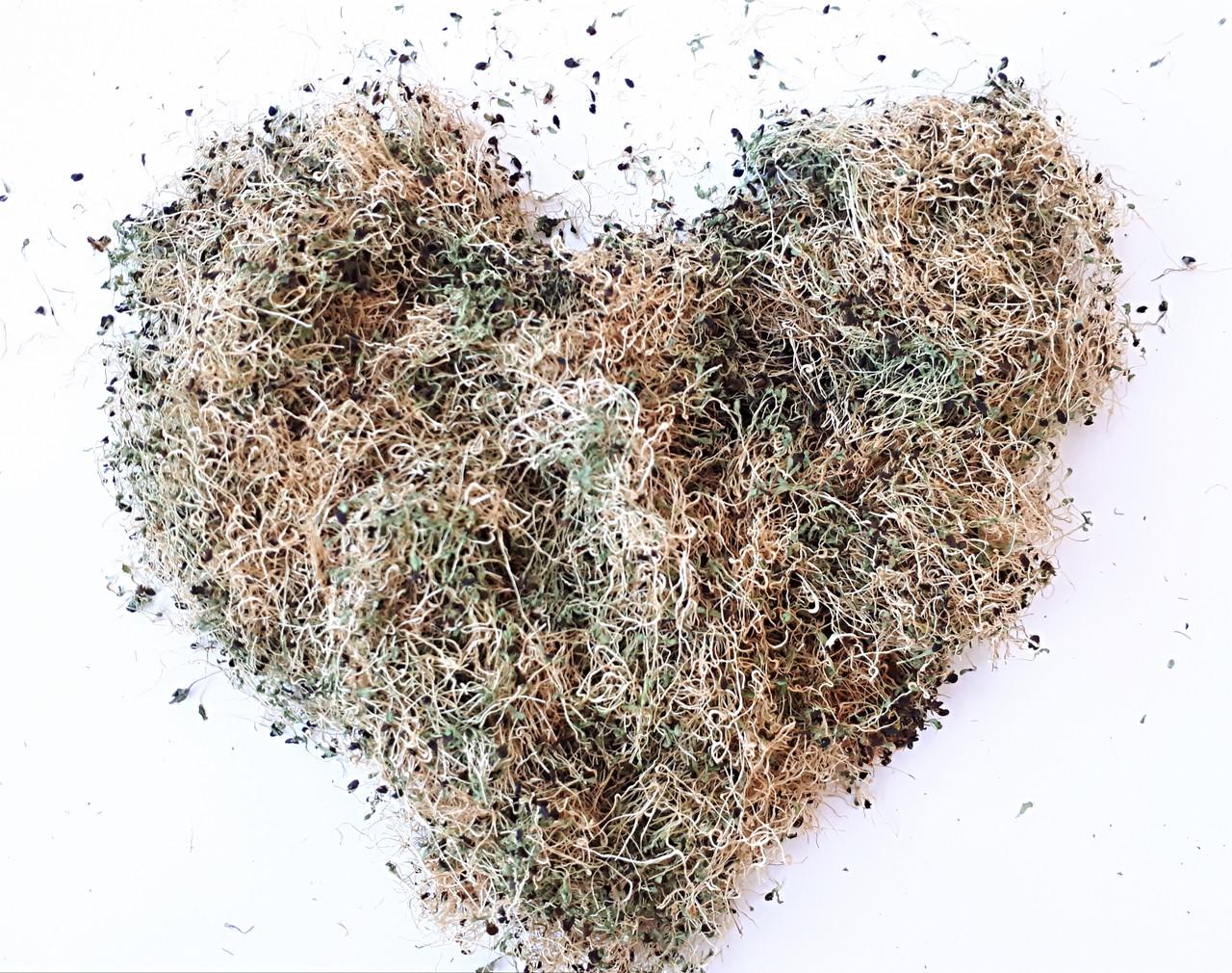 Сухая микрозелень люцерны
