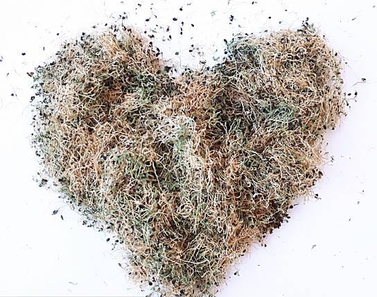 Сухая микрозелень люцерны , фото 2