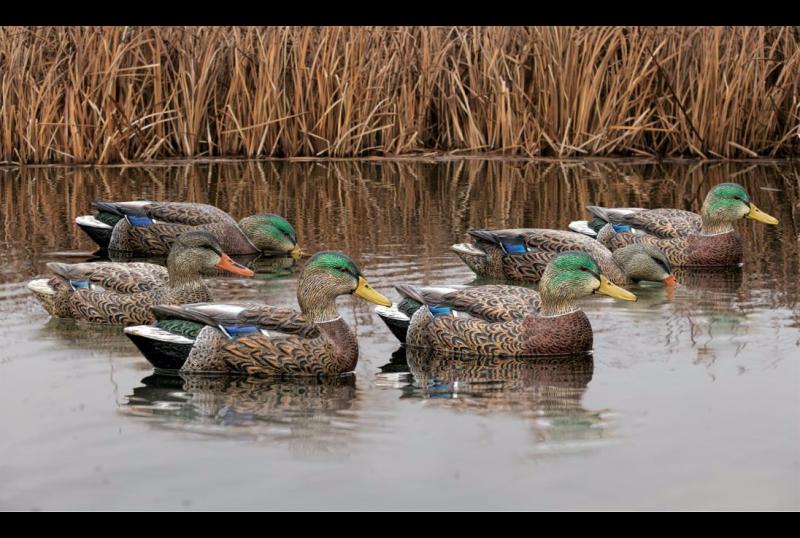 Чучела уток Avian-X Early-Season Mallard Decoys