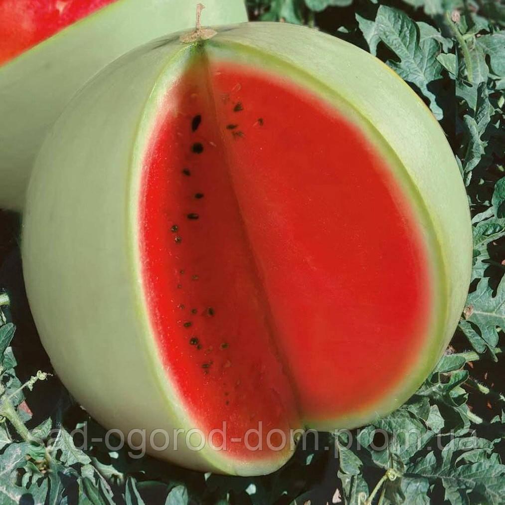 Семена арбуза Снежок  0,5кг