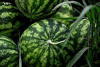 Семена арбуза Спасский 0,5кг