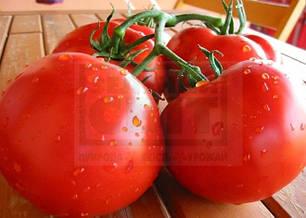 Семена томата Полбиг F1 5 г (Бейо/ Bejo) — ранний (62-65 дня), красный, детерминантный, круглый, фото 2